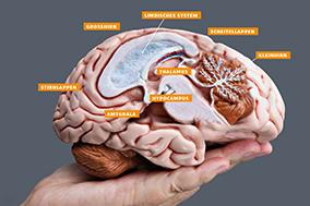 edutrainment Ausbildung Grundlagen Gehirn